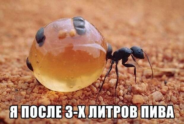 23.  мем, прикол, юмор
