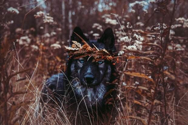 5. Когда вокруг меня стало меньше людей, я понял: сила в верности, а не в количестве жизненная позиция, жизнеутверждающие, канада, собаки, философия жизни, фото собак, фотограф, хаски