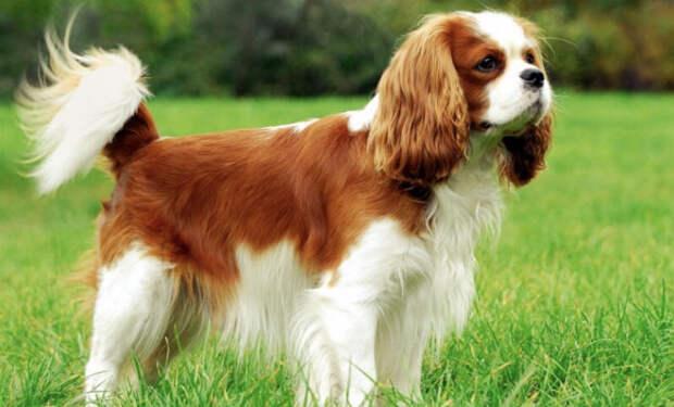 Сколько стоит самая дорогая собака