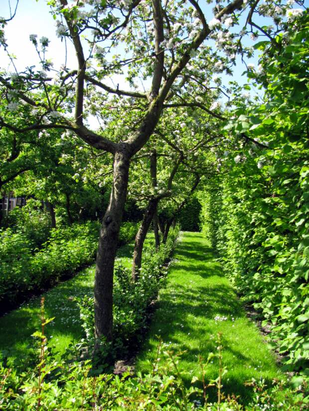 Фруктовый сад