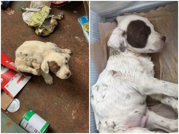 Раненый щеночек лежал среди мусора, но хрупкое тельце еще шевелилось история спасения, помощь животным, собака, собаки, спасение животных, щенки
