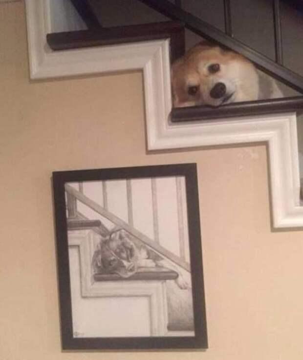 Забавные, смешные и прикольные фото из сети для улыбки и позитива