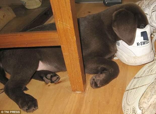 Ой, какой сонный запах! животные, мило, собаки, фото