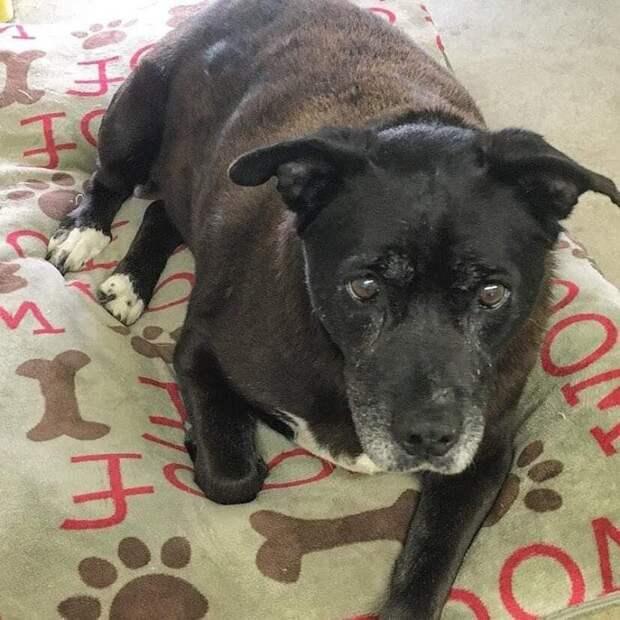 История 14-летней собаки, которая обрела семью после 11 лет в приюте