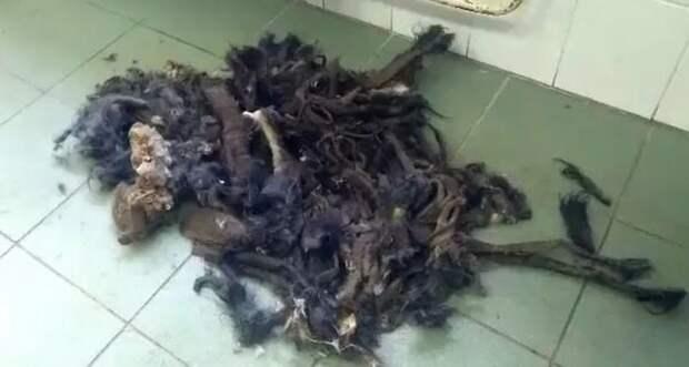 Работники приюта сбрили с бедняжки почти 3 килограмма шести, после этой процедуры пёс «похудел» в два раза Польша, животные, зоозащитники, люди, собака, спасение, хозяин