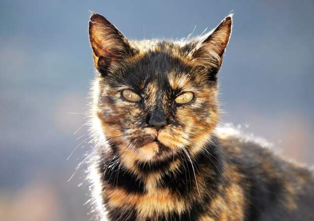 Энергетическая сила кошек животные, коты, факты
