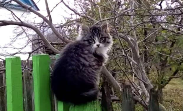 Котенок вышел на мышей и крыс