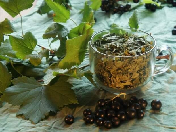 Готовый ферментированный чай лучше хранить в стеклянной емкости / Фото: ok.ru