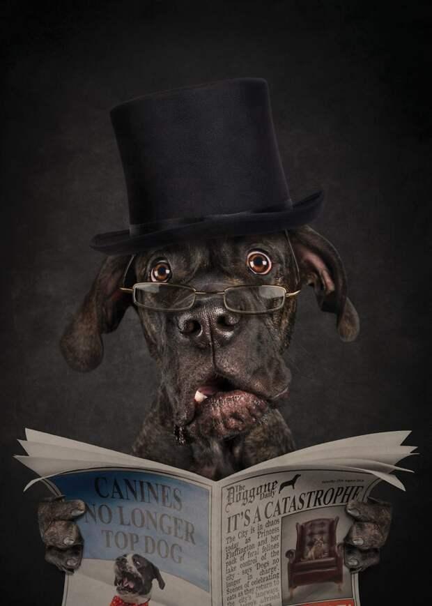 1. Это КОТострофа! Принцесса Пушистик и ее кошачья банда захватили власть в городе! Забавные фото, анималист, домашние животные, очеловечивание, портреты животных, собака, собаки, фото собак