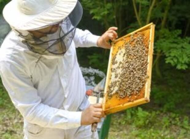 Почему правительство США заставляет учёных молчать об опасности пестицидов?