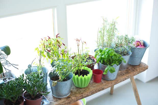 Советы, как спасти пожелтевшие листья комнатных растений