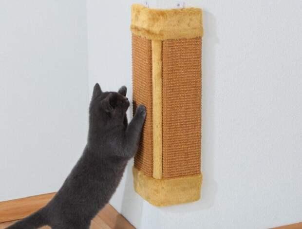 Как выбрать когтеточку для кота?