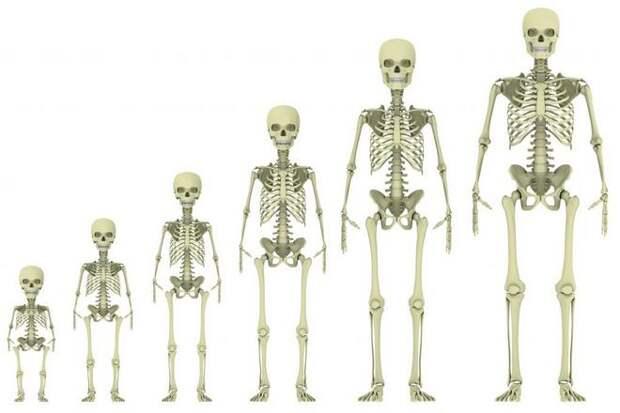 изменение скелета человека с возрастом