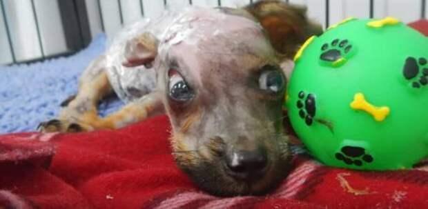 История о щенке, которого облили кипятком и выбросили в окно