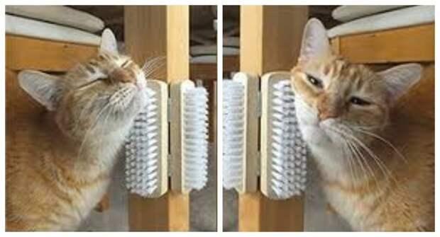 щетки, чтобы почесаться игрушки для животных, коты, собаки