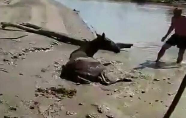 В Тюменской области рыбаки три часа откапывали упавшую и застрявшую в грязи лошадь