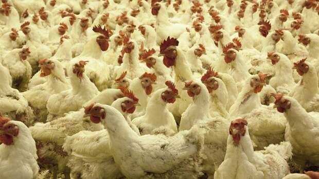 В тюменском селе гору птичьих экскрементов назвали в честь экс-чиновника
