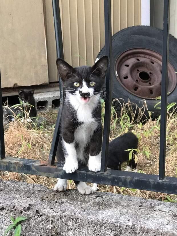 Интересные факты о котиках