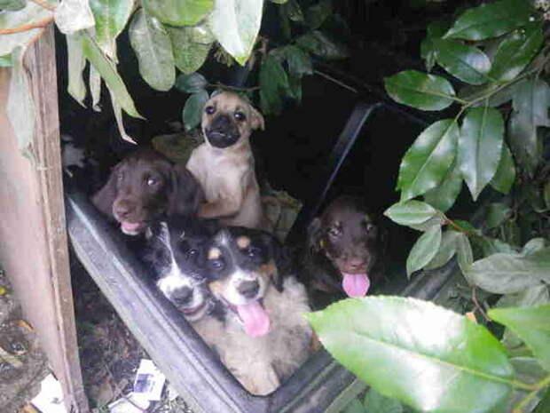 Мужчина выбросил девять щенков, потому что не смог их продать