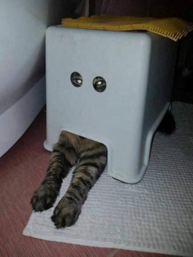 Эти котики - самые эффективные антидеспессанты!