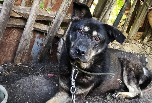 «7 месяцев одиночества и голода»: люди спасли худых собак, забытых в пустом доме
