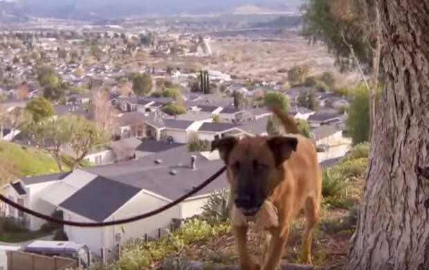Собака, которую хозяева сдали в приют, смотрит, как её семья выбирает нового питомца...