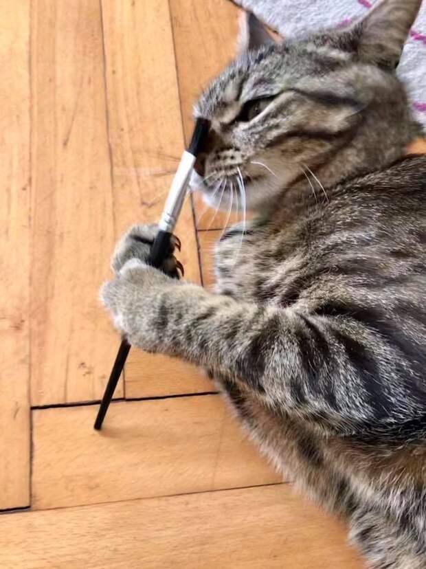 Чаще всего кошки поедают изделия из шерсти