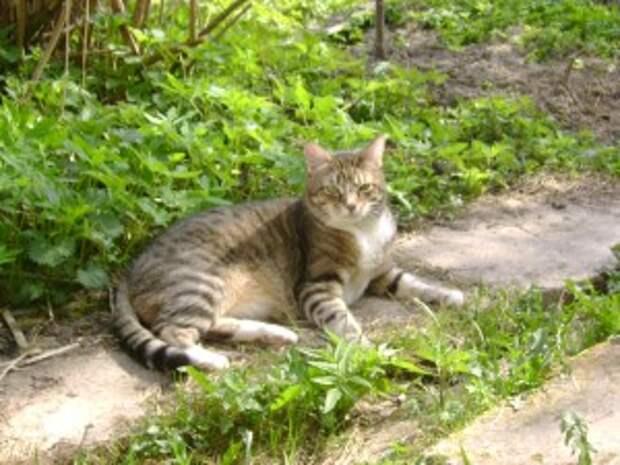 Кот Шурик. Погиб в сражении со стаей собак на даче, так как был на свободном выгуле.