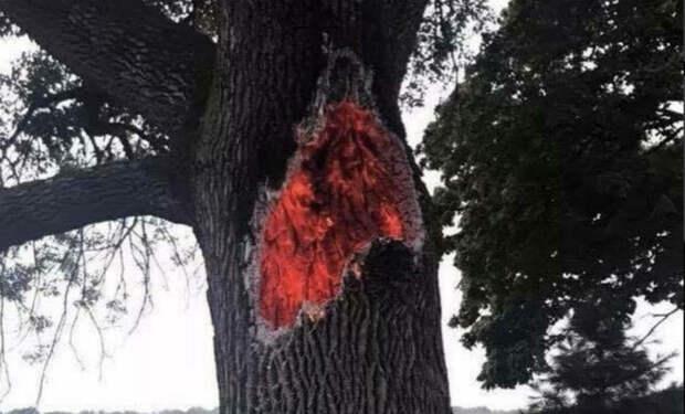 Огонь внутри ствола растущего дерева: после удара молнии люди засняли редкое явление