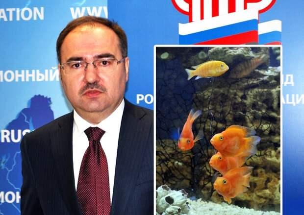 Пенсионный фонд тратит деньги на аквариумных рыбок