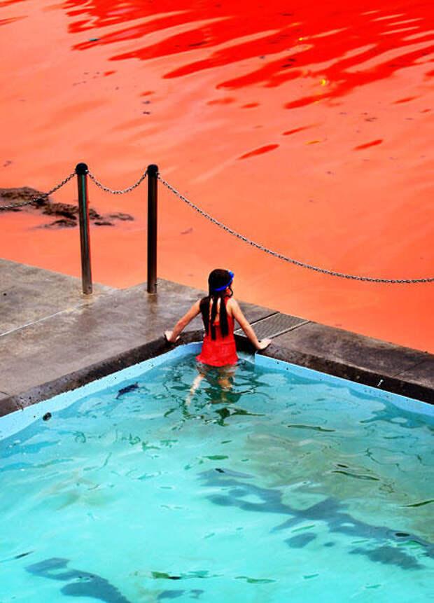 krovavoaliokean 5 Вода на пляжах Австралии окрасилась кроваво красным, напугав отдыхающих