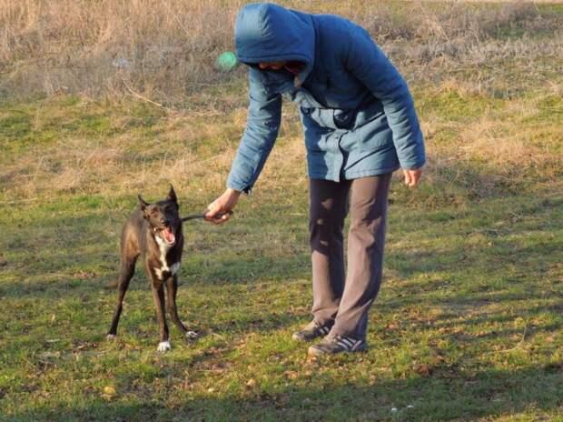 Собаку без лапы приютила волгодонская семья любителей животных