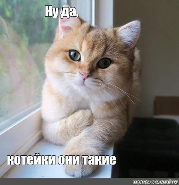 """Комикс мем: """"Ну да, котейки они такие"""" - Комиксы - Meme-arsenal.com"""