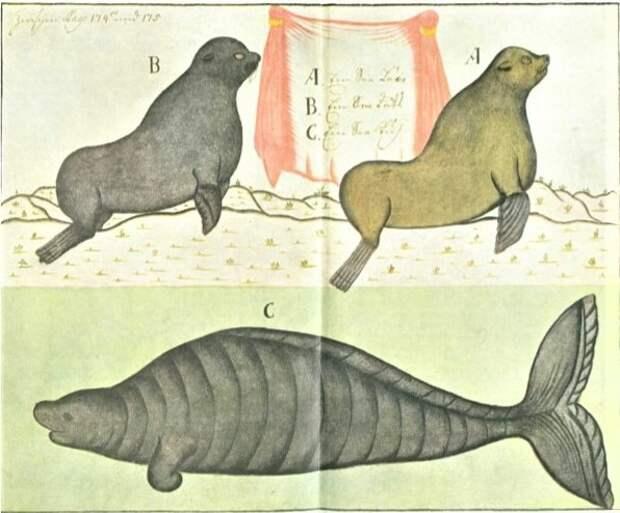 Морской лев, морской котик и морская корова. <br>