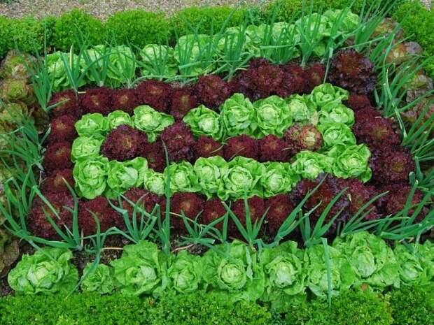 Польза лука в огородничестве