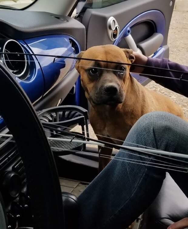 Девушка просит интернет-сообщество помочь ей уговорить парня взять бездомную собаку девушка, животные, история, пара, помощь, собака, соцсеть