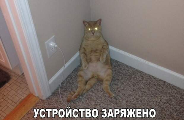 Забавные животные :