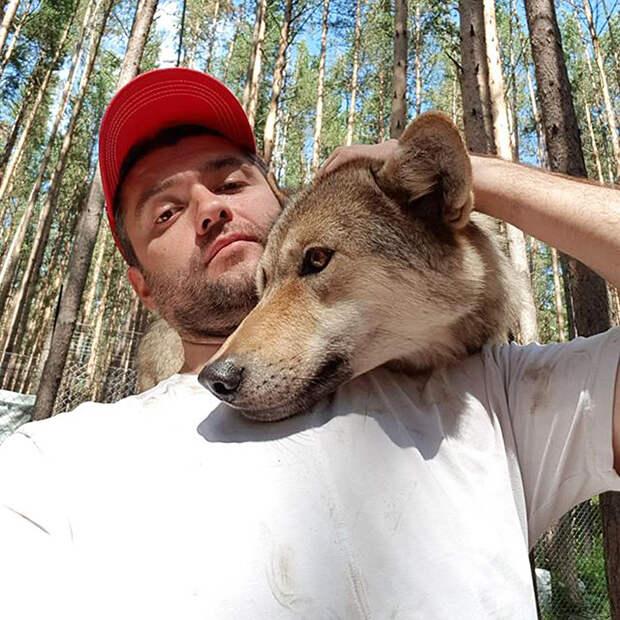 Этот русский бизнесмен стал вожаком волчьей стаи