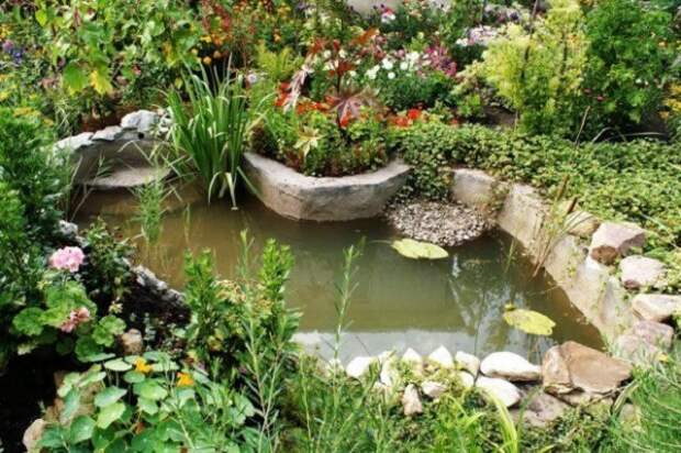 водоем в гипоаллергенном саду