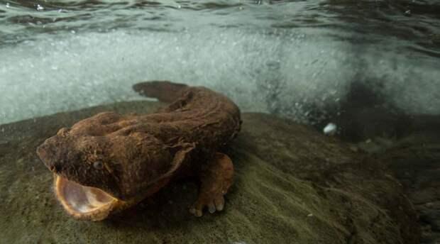 Самые страшные ископаемые существа, которые все еще существуют
