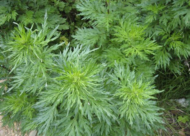10 растений, которые стоит обходить стороной