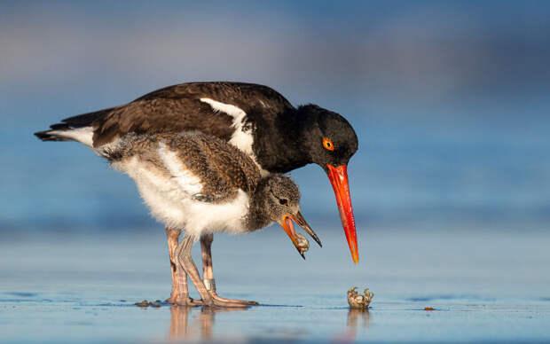 Финалисты фотоконкурса Bird Photographer Of The Year 2021