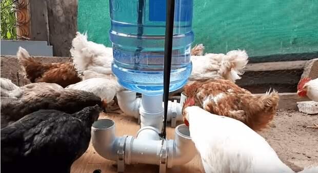 Надежное и автономное приспособление из обычной бутылки: для всех, у кого есть домашние животные и птицы