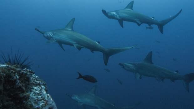 Археологи обнаружили останки пострадавшего от древней акулы жителя Японии