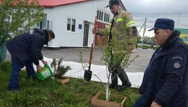 Пожарные высадили 40 деревьев в Подольске в память об участниках ВОВ