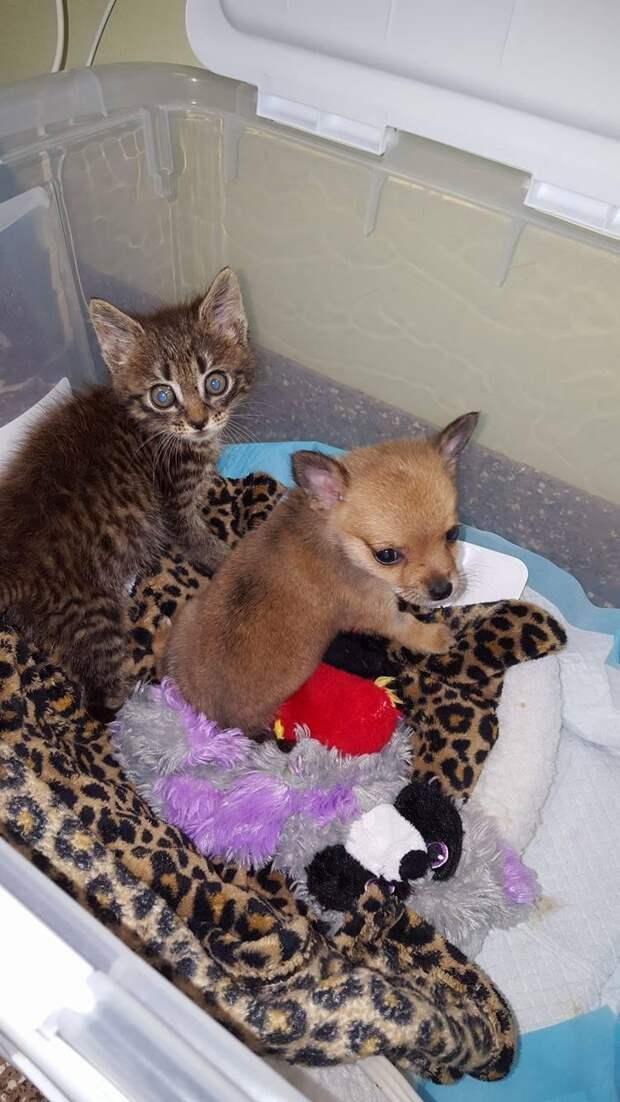 Маленький котенок спас щеночка и теперь они не разлей вода