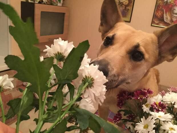 Тощая собака из приюта дрожала от холода… Но именно она уехала Домой
