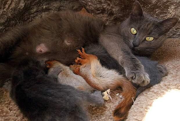 В Бахчисарае кошка стала матерью для трех бельчат