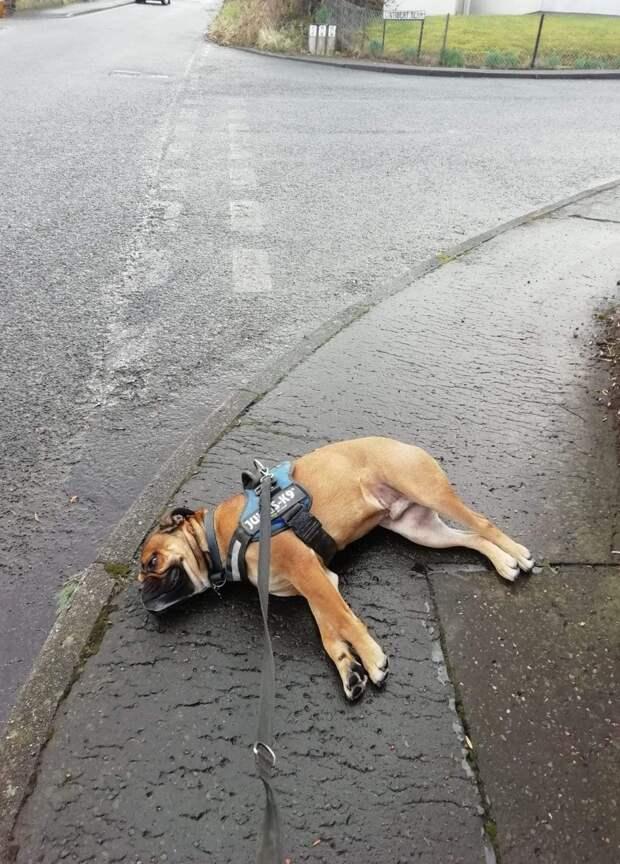 Настоящий актер: капризный пес устроил «спектакль» прямо на улице, переполошив людей