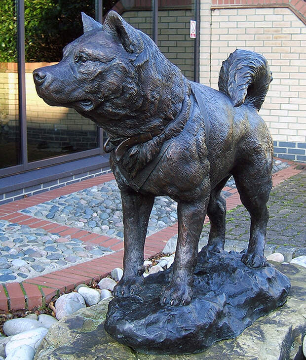 Памятник ездовым собакам в Антарктиде.